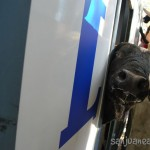 Desencajonamiento. Los toros llegan a Valonsadero