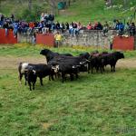 Desencajonamiento 2013: Los toros de San Juan corren por Valonsadero