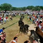 Jueves la Saca 2013. Una Saca de seis toros