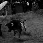 Lavalenguas 2013. Al mal tiempo mucha fiesta