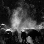 Jorge Sanz se lleva el premio del V Concurso Fotográfico de San Juan